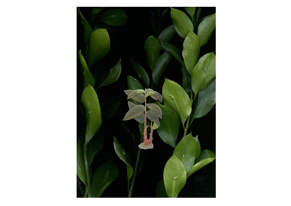 Weixin-Chong---Specimen-2,-Lambda-print-on-Chromica-Metellica,-60-x-82.56cm,-2013.-.jpg