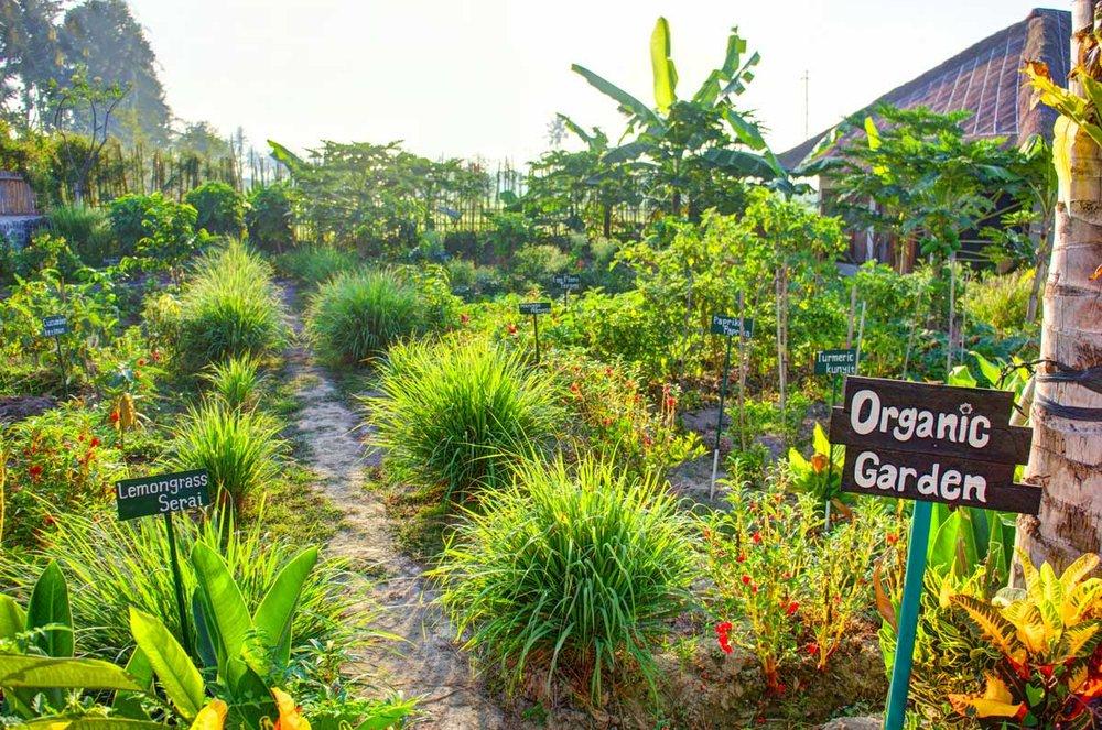 Bali-sukawati-retreat-garden1.jpg