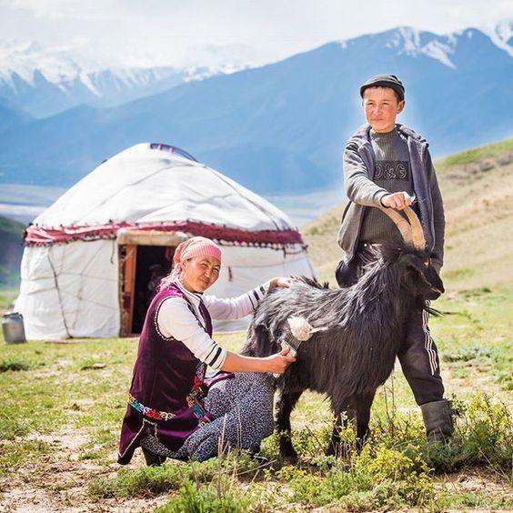 Woman Combing Cashmere Goat via  June Cashmere