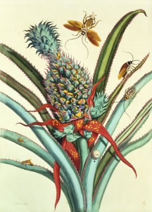 2.2.2.x-collection-detail-merian_plate_2.jpg