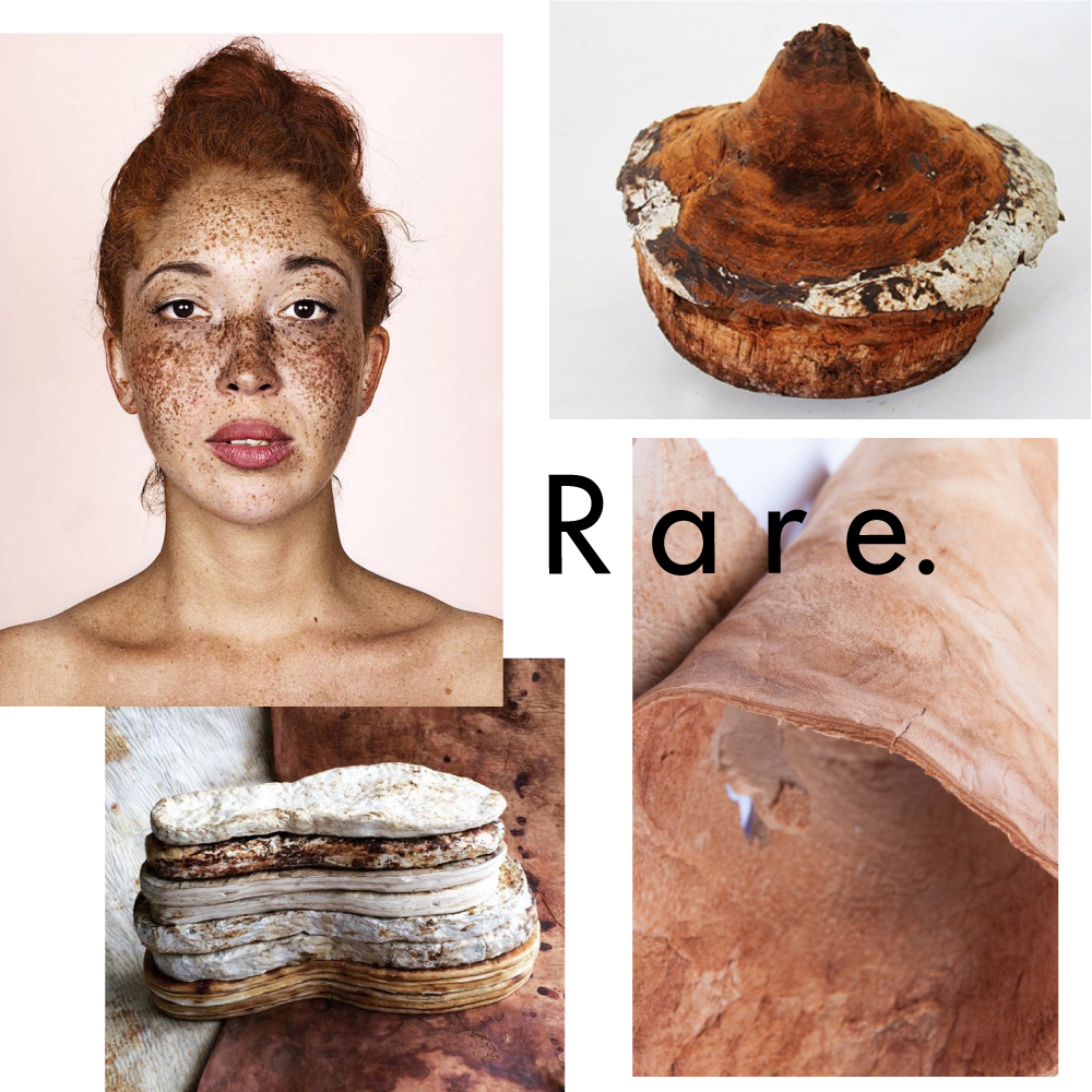RARE - A MATERIAL TREND BY TACTILE TRENDS  Images Left to Right:  Brock Elbank  -  ZVNDR  -  Mycoworks  -  Muskin