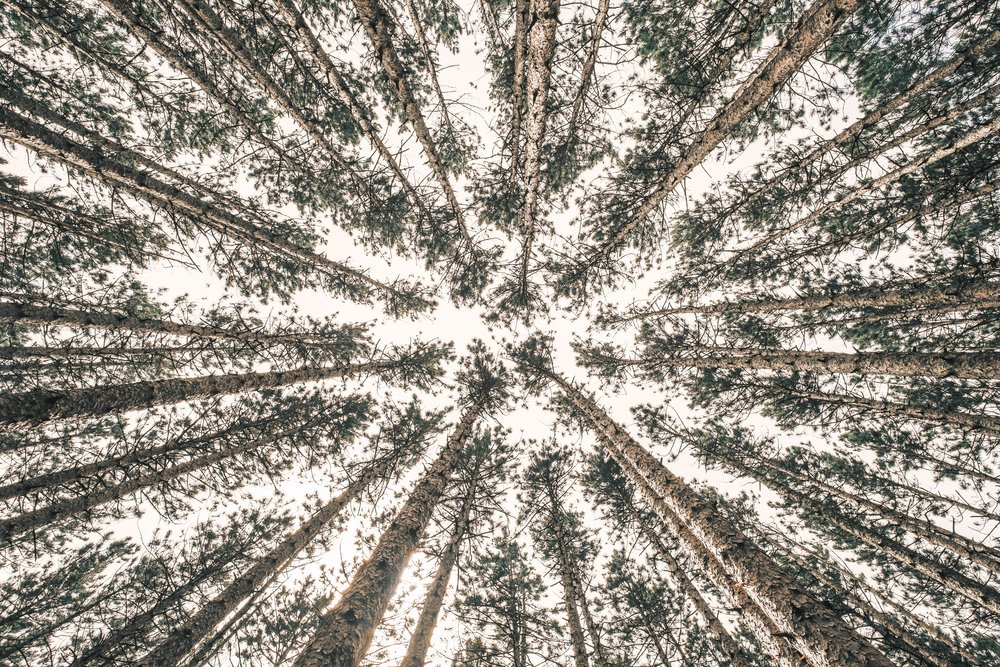 Bryan Minear via Unsplash