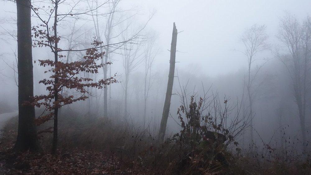 forest_600.jpg