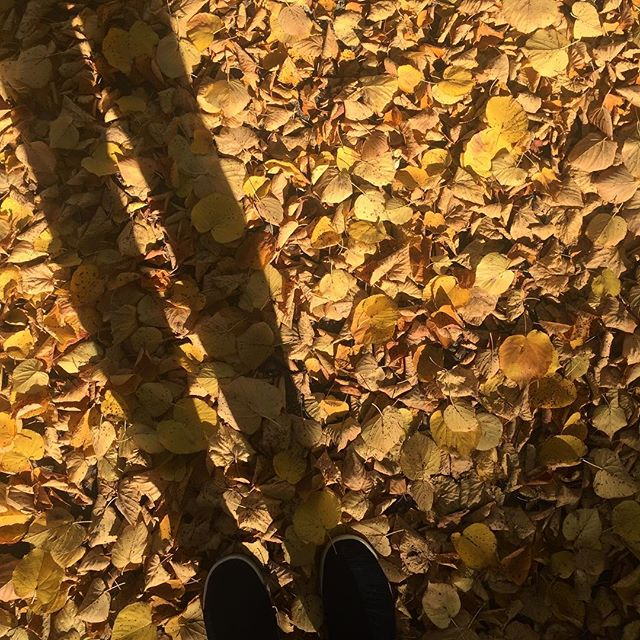 When the sun is low and the  shadows are long... . #tactiletrends #colourventures #autumn #goldenhour #colourofautumn #seasonspoetry #momentsofmine #stillswithstories #shadowplay #moodygram #leaves #dscolour #dslooking