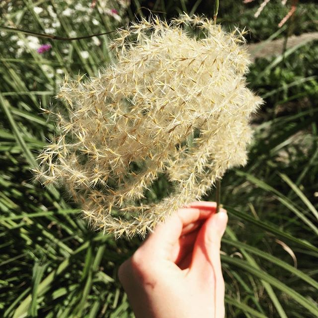 A circular and sustainable future lies in our careful observation of nature. . #tactiletrends #sustainability #circulardesign #designersofinstagram #naturepic #patternity #dstexture #dslooking #momentsofmine #stillswithstories #exploretocreate #lostinnature #seasonspoetry #agameoftones #creatives #materialfutures #slowfashion #fromthegarden