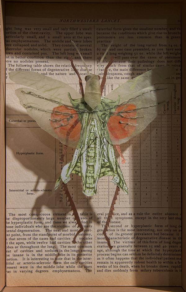 locust2.jpg
