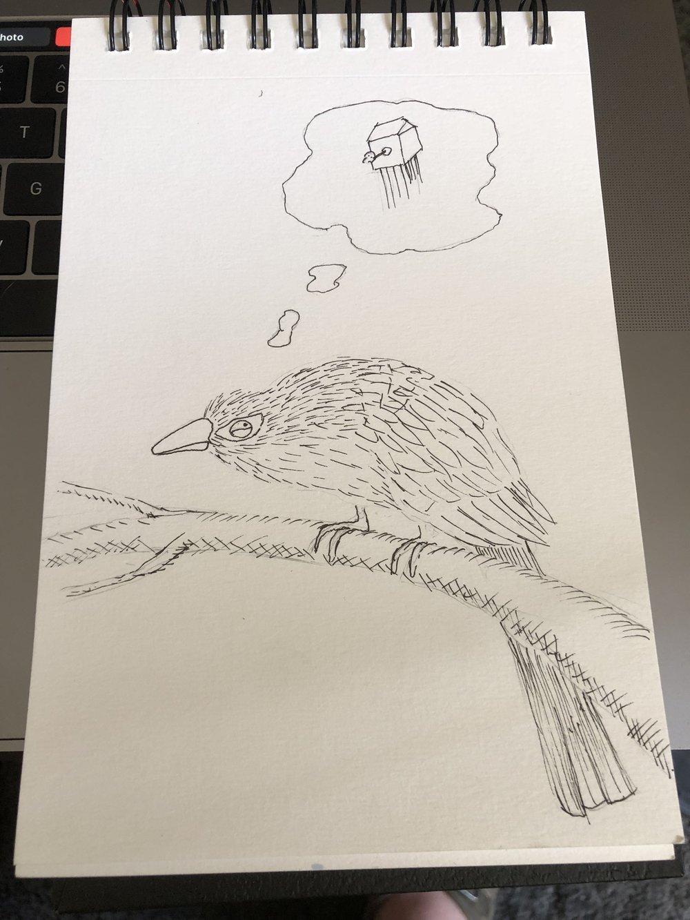 cuckoo pen.JPG