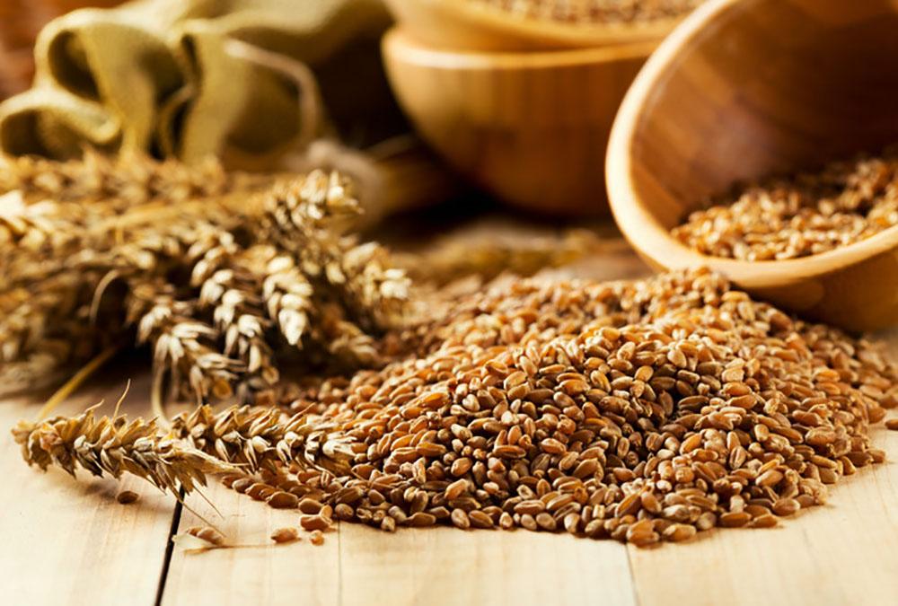 food-for-fuel-grains.jpg