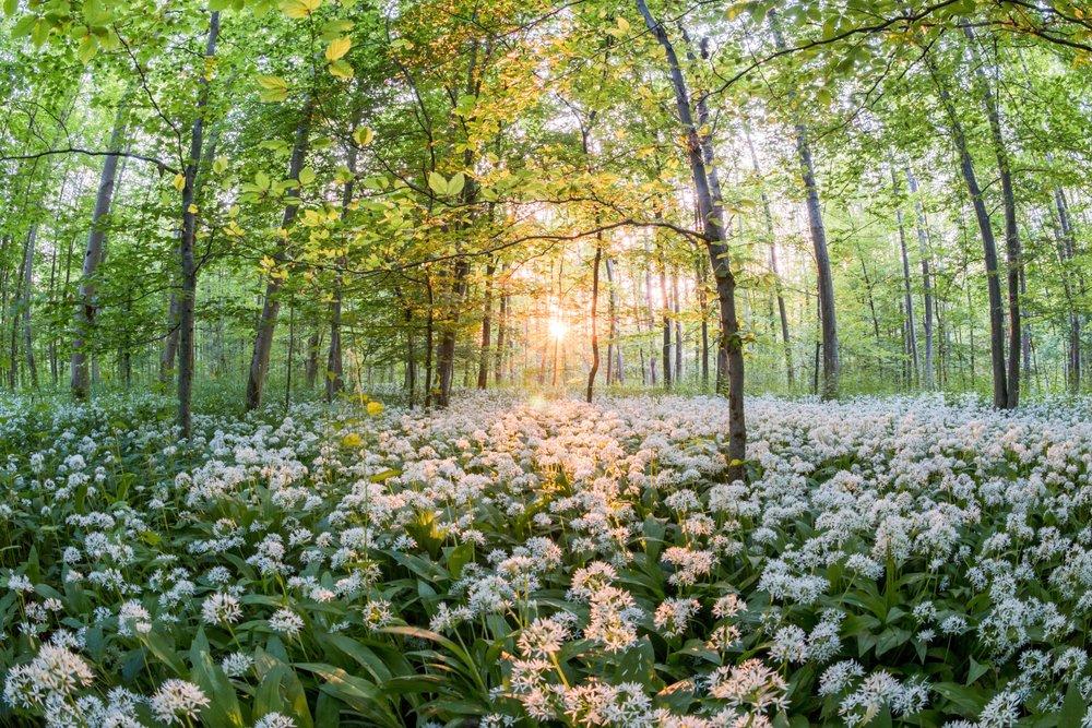Spring-_Forest_-_edited.jpg