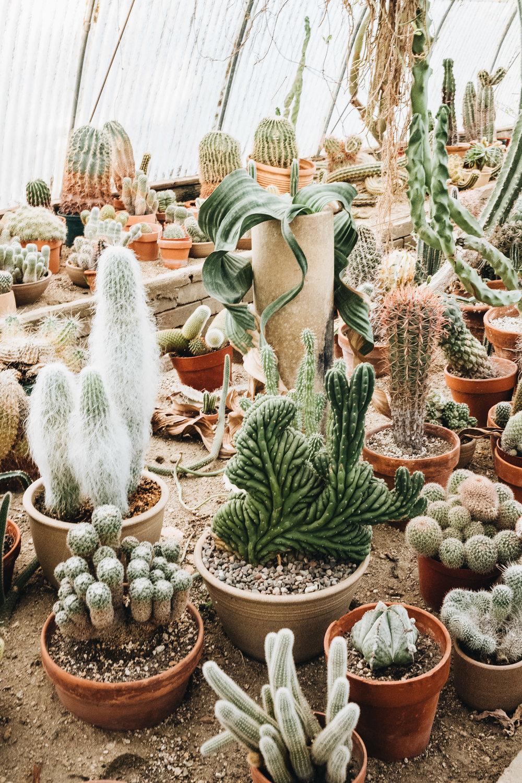 Moorten Botanical Garden, Palm Springs, California