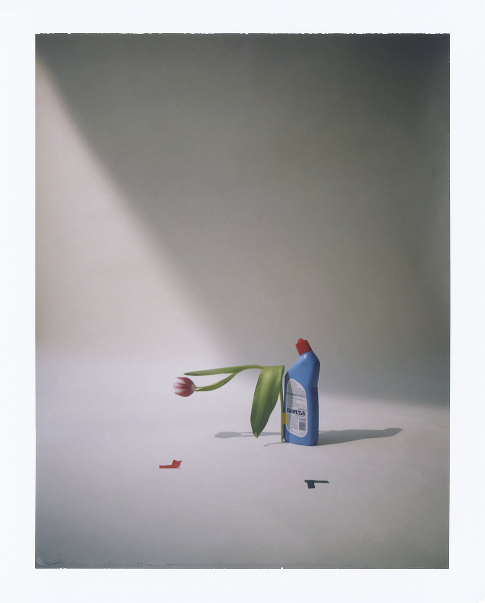 Flowers By Adrien Dubost