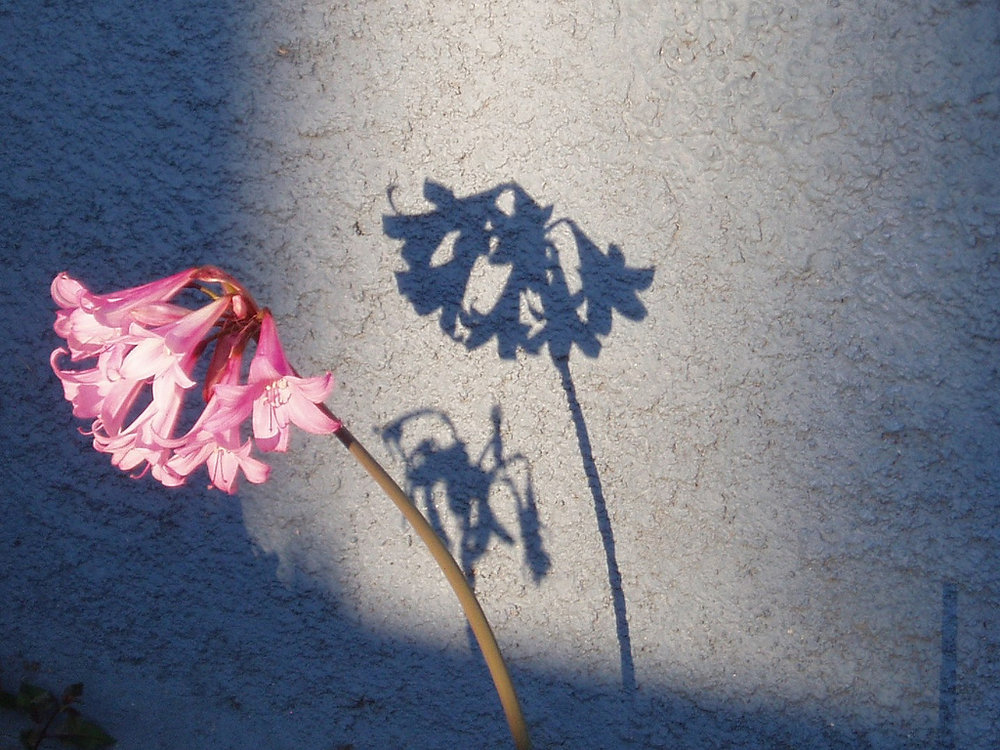 shadowandflower