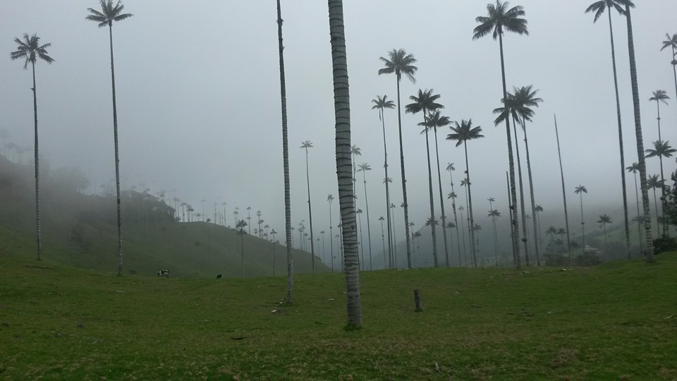 The Cocora Valley in Colombia.