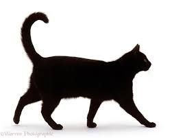 Bryan_Pollock Cat2.jpg