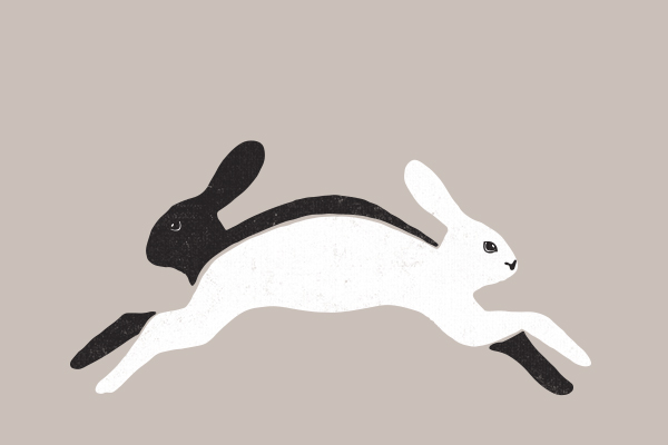 RabbitRabbit_Image2.jpg