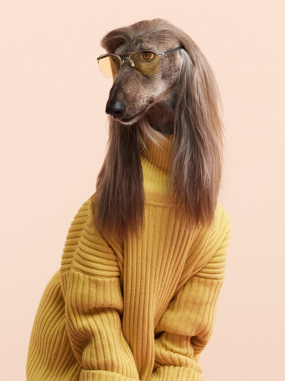 08-Canine.jpg