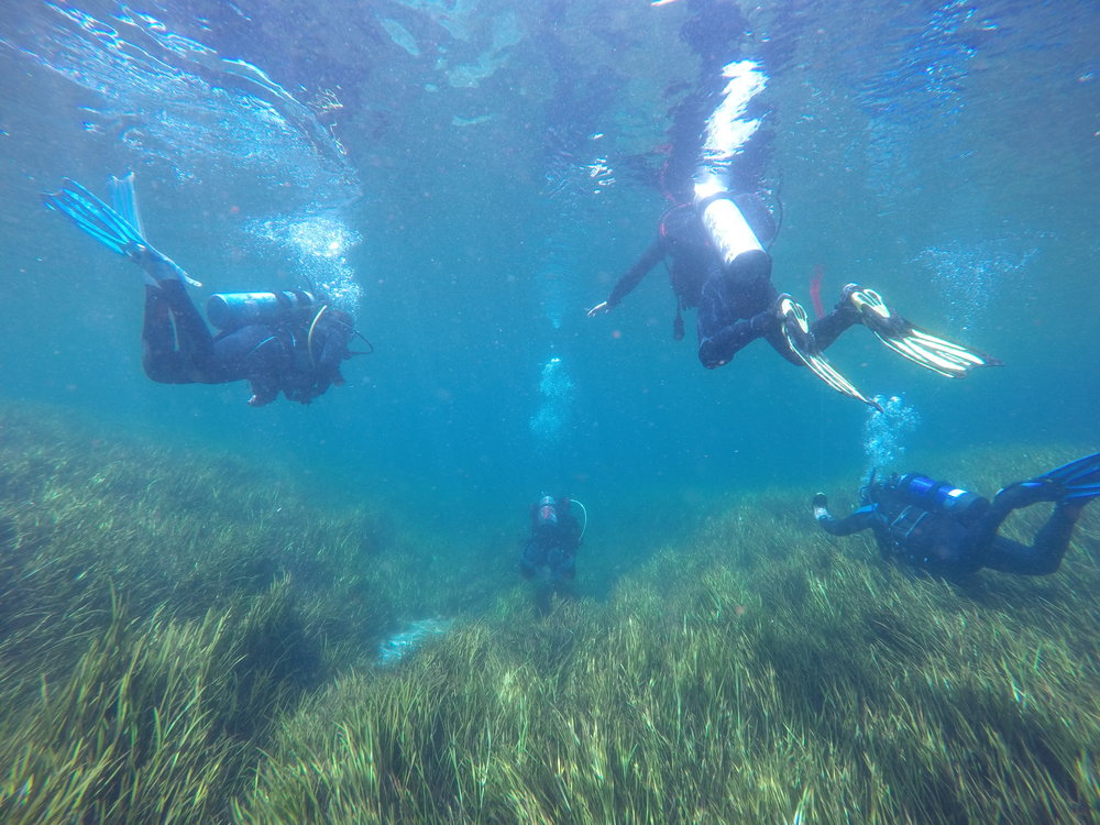 Drift Diver - Looking to safely dive Floridas Springs and coast lines our Drift diver class can help guide you down your path.