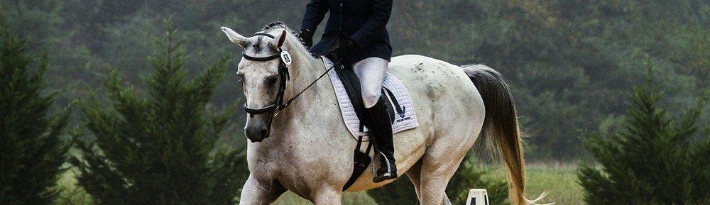 horse-573770_1920.jpg