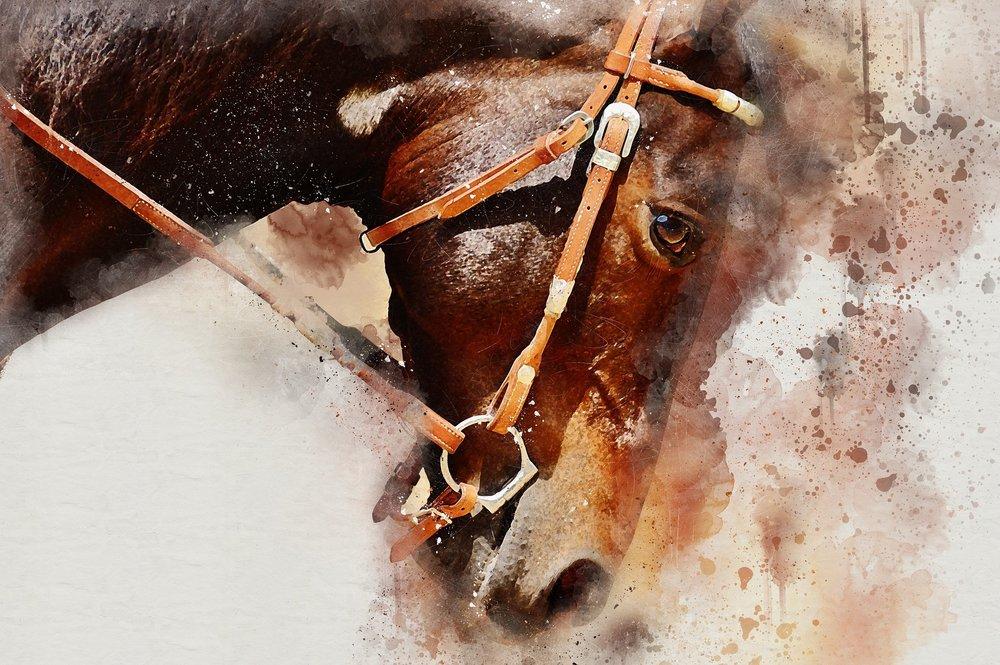 Equine Content Creation