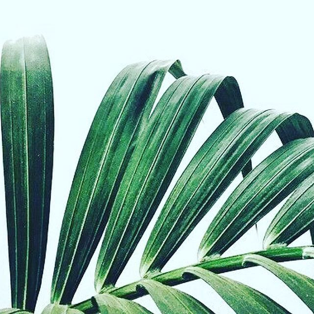 N E W  Y E A R 🌿 N E W  L E A F - LEAF was founded by @eminerushton in 2016, to offer conscious consultancy to the purest natural brands & truest wellbeing experts. 🌿 This year, LEAF branches out - partnering with Jess de Bene & Amy Le Roux, of JessandAmy Creative Communications, to offer a thoughtful & integrated way of working - that builds community, organically & authentically, and seeks to do away with the unsustainable & unhealthy business model. 🌿 We all need light, air & water to thrive - this is LEAF - fully conscious business that places our wellbeing & our loved ones, well ahead of our profit margins. And we're not ashamed of it! 🌿 LEAF are so very proud to represent the following purely brilliant brands, and their pioneering founders: @movementformodernlife & lawyer-turned-girl-yogi-boss, founder Kat Farrants; @mvskincare & straight-talking organics pioneer, founder Sharon McGlinchey; @therapieroquesoneil & Pure Alchemist & healer, founder Michelle Roques O'Neil; @twelvebeauty & incomparably knowledgable naturals expert, & founder, Dr Pedro Catala; and FOODGROWN supplements brand @wildnutritionltd & women's health expert, author & founder Henrietta Norton. 🌿 You can reach us at comms@leafcreate.com 🌿