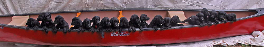 Boatload of puppies by Kurt courtesy of Flickr.jpg