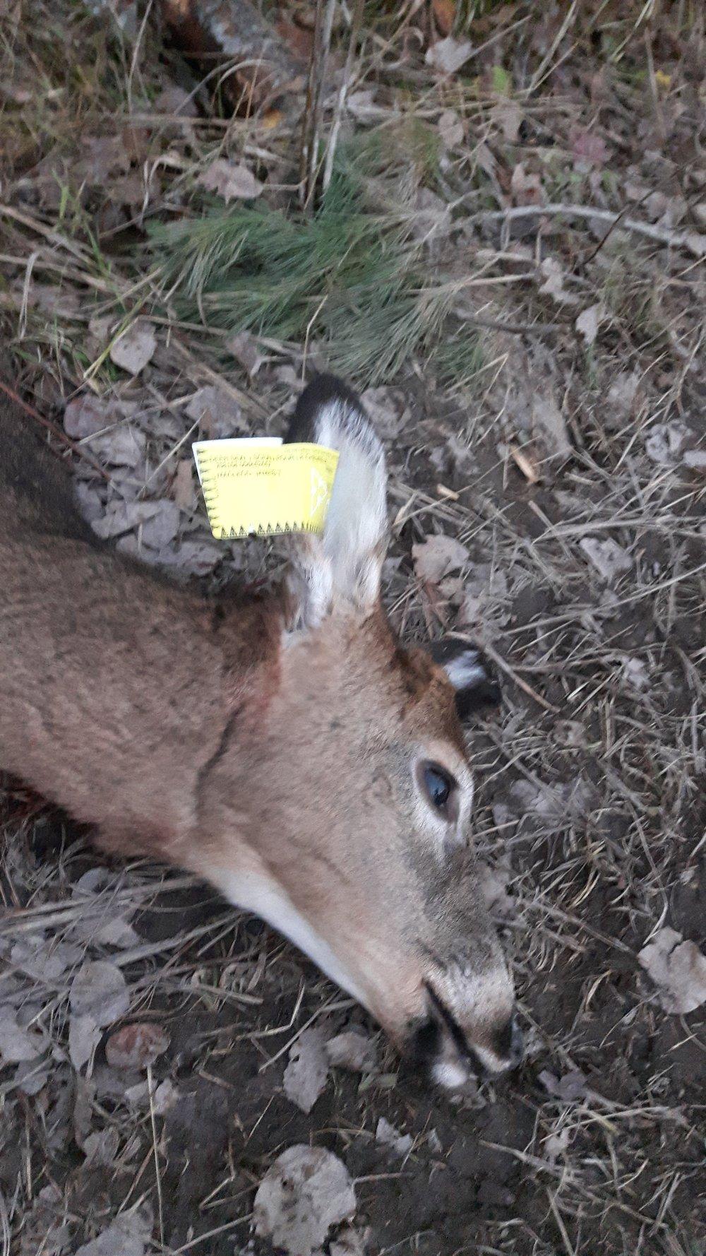 Harvested Deer | Tagged 2016