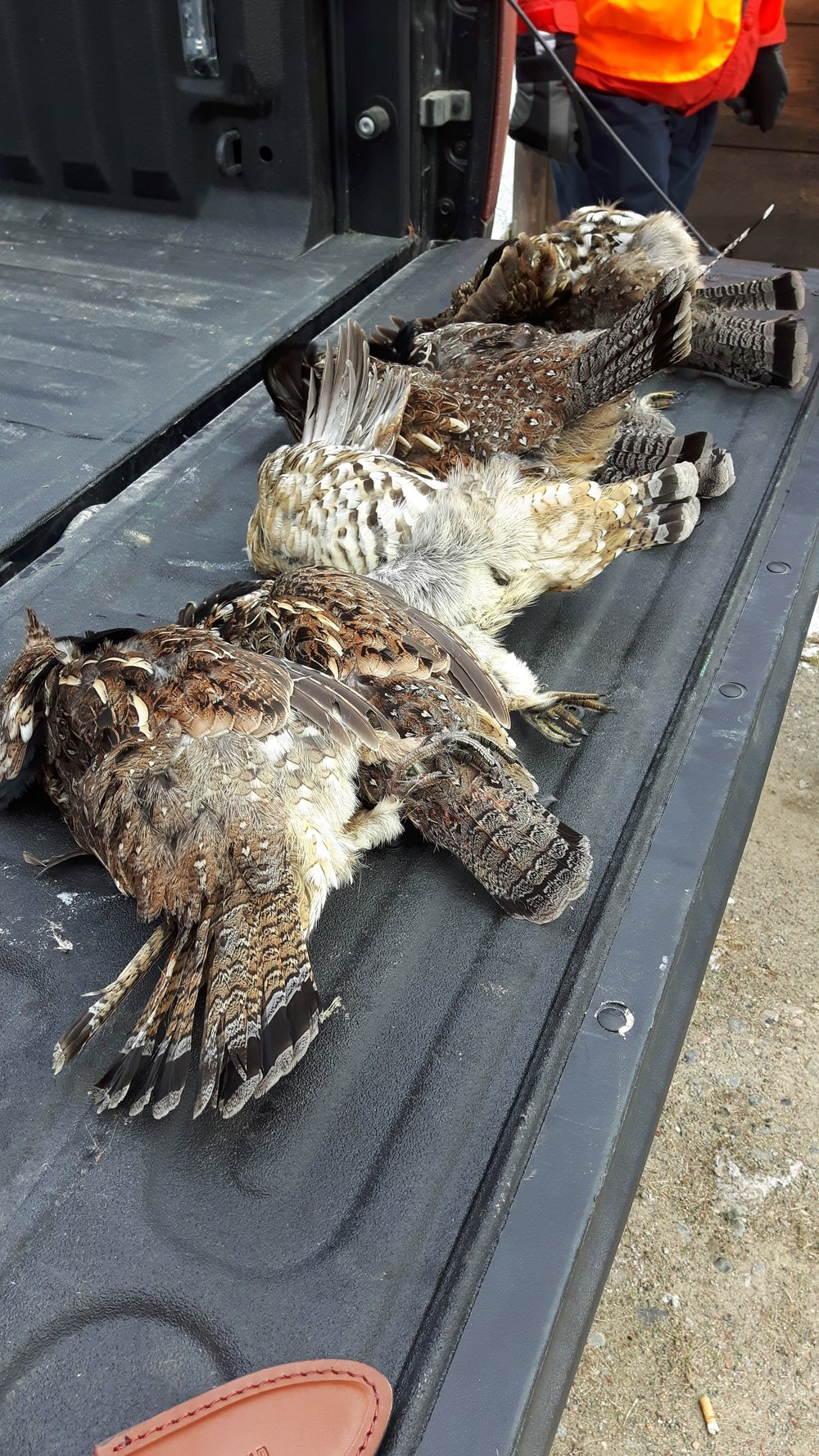 Tailgate of Grouse