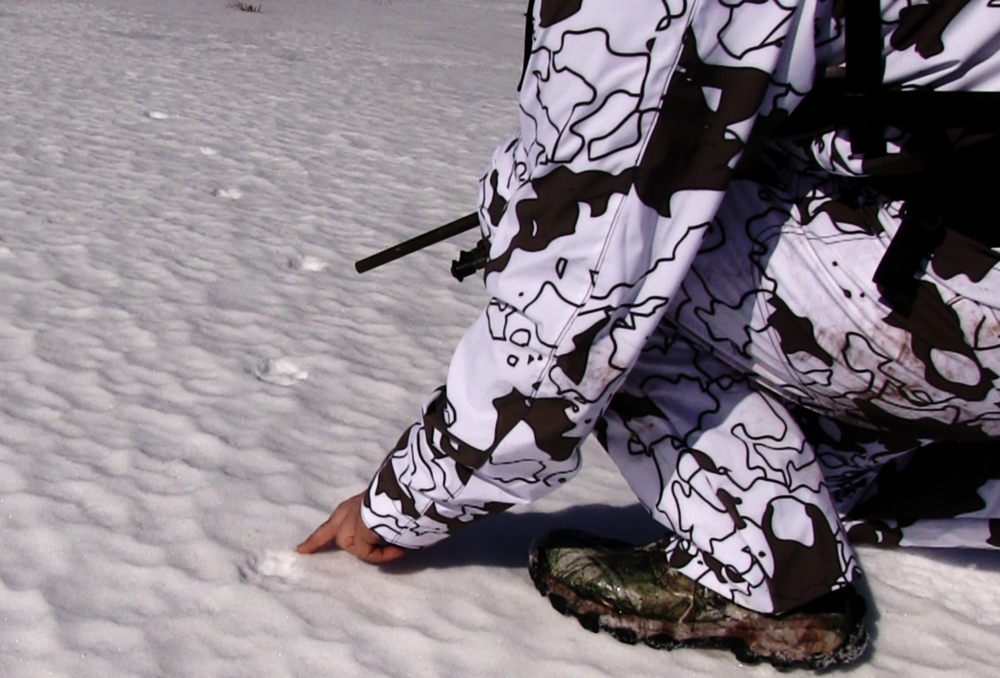 Wolf Hunt |Wolf Print in the Snow