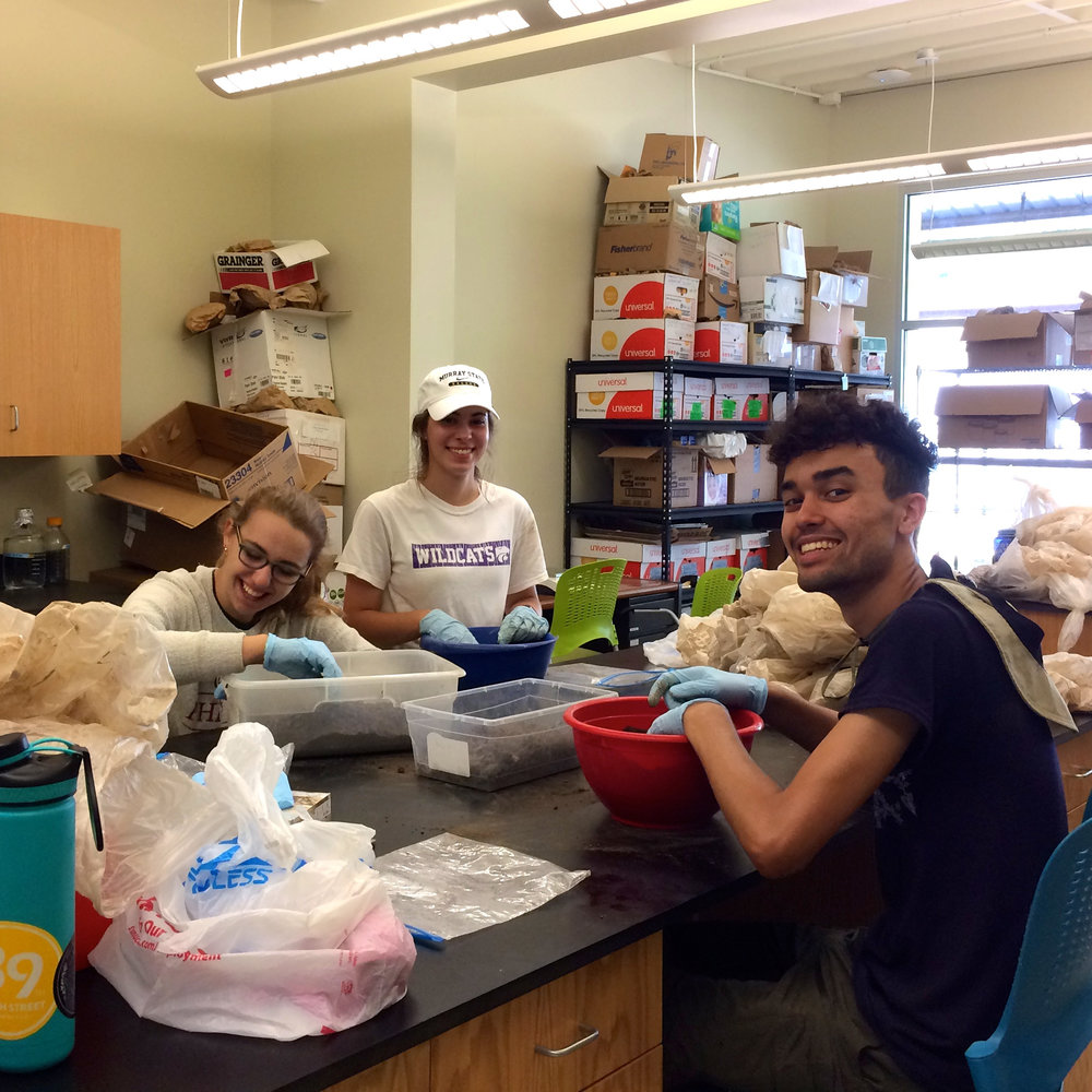 Anna (center) is sifting roots and rocks from prairie soil samples alongside WashU undergraduate students Rebecca (left) and Jacob (right). They are members of the Natural Enemies team working under the direction of Dr. Scott Mangan and Dr. Claudia Stein.