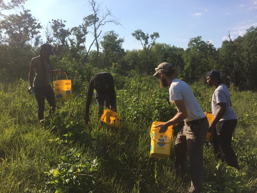 Learning from the best at Shaw Nature Reserve, Grey Summit MO.  Ecological Restoration Specialist, Mike Saxton, shows the Outdoor Youth Corps the ropes, collecting native seed to restore ecosystems throughout the preserve.