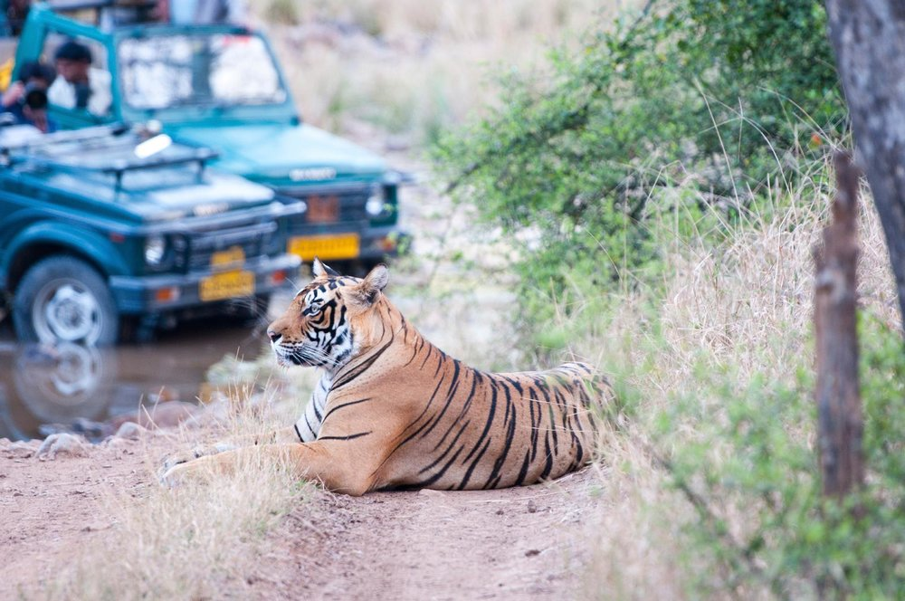 India - Rajasthan, tigersafari og strandferie på Goa.