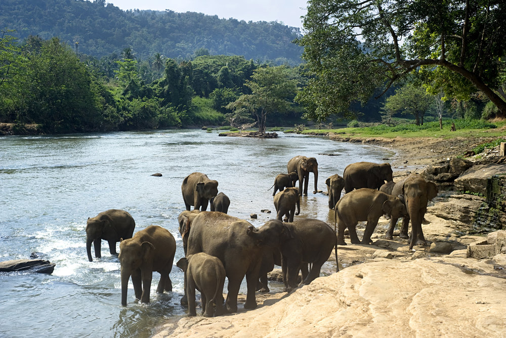 bigstock-india_Elephants-Bathing-23519015.jpg