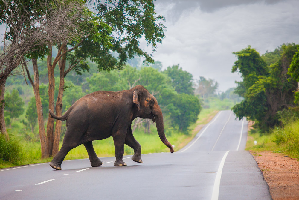 Natur og kultur på eventyr i Sri Lanka