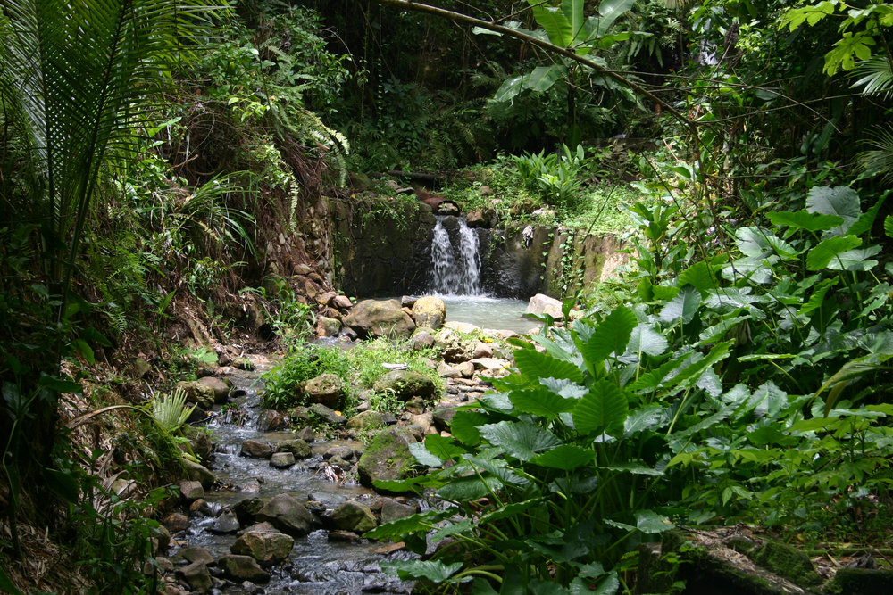 Eksotisk gourmetferie på Grenada & St. Lucia - en ferie for livsnytere