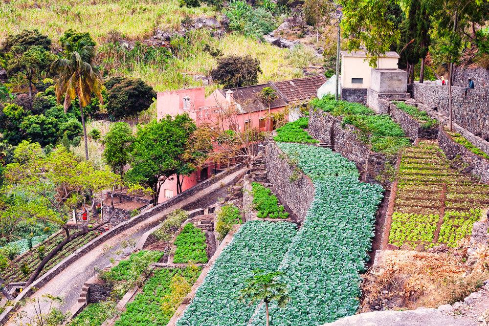 Planter i terrasser på Kapp Verde