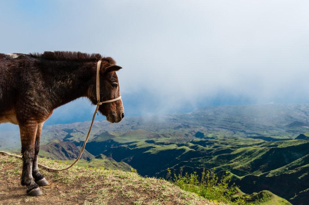 En hest venter på sin eier på Kapp Verde