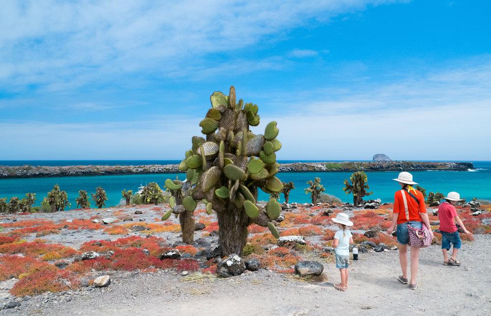 Gå i Darwins fotspor og unn deg en unik naturopplevelse med øyhopping på Galapagos.