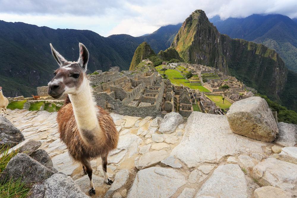 peru_bigstock-Llama-Standing-At-Machu-Picchu-142489499.jpg