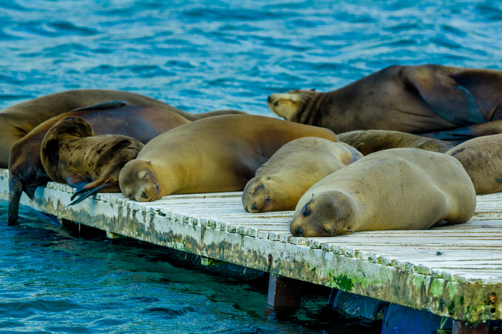 galapagos_bigstock-sea-lions-laying-on-the-dock-g-79690999.jpg