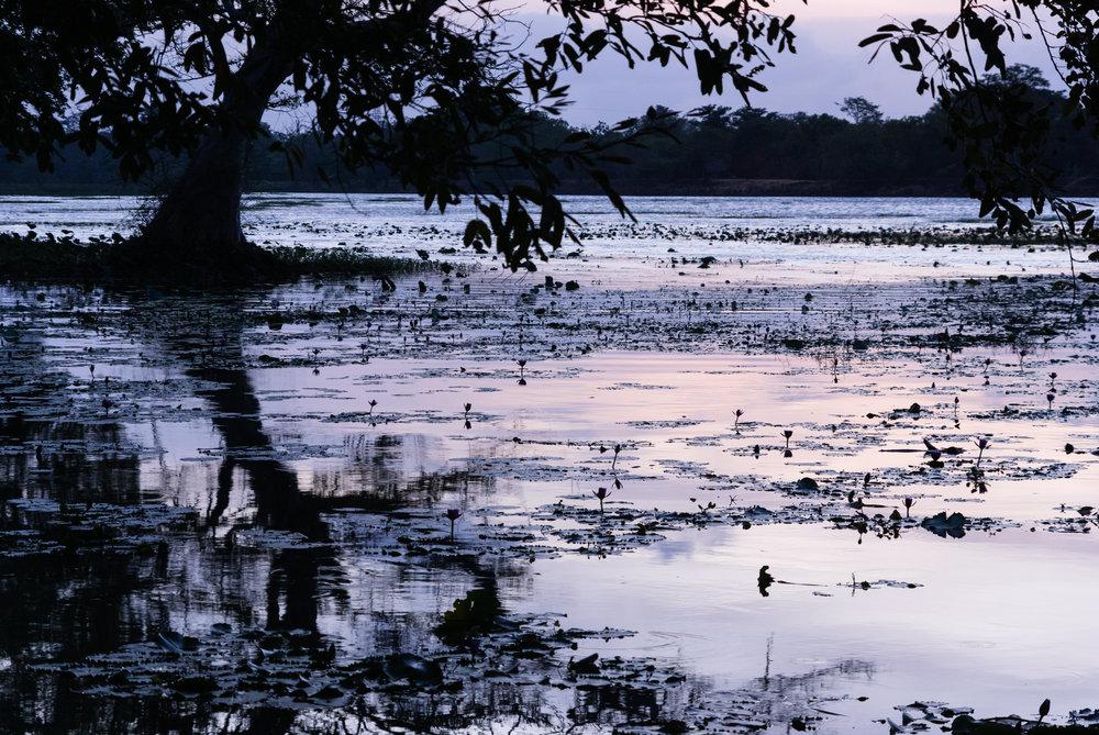 srilanka_Habarana_bigstock-Habrana-Lake-At-Dusk-99276902.jpg