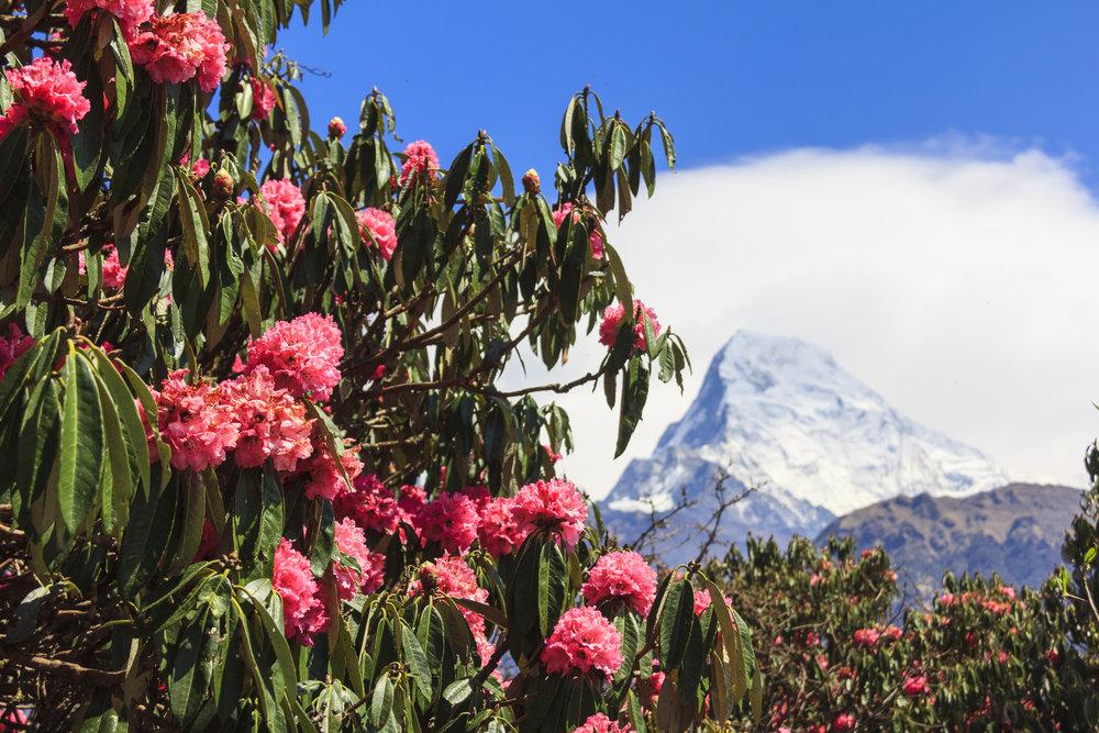 nepal_annaparuna_bigstock--177083566.jpg