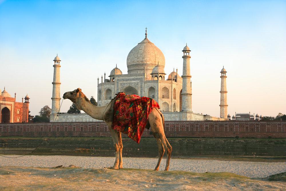 india_bigstock-Camel-in-front-of-Taj-Mahal-in-25998248.jpg