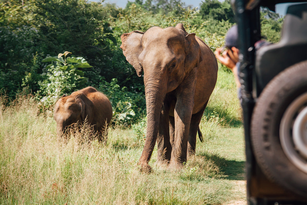 srilanka_udawalawe_bigstock--221662597.jpg