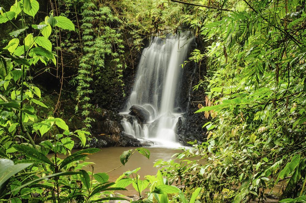 bigstock-costarica_Rain-Forest-Clearing-47807000.jpg