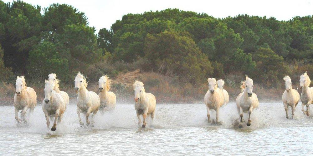course_chevaux.8d2d48c3e063deb2635178da8de35653.fc8dbcf636de6e4f254184f913a218b9.jpg