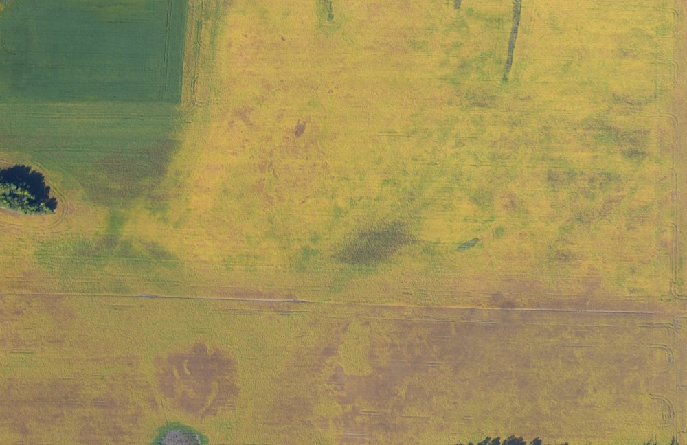 Harvest Planning and Dry-down Estimation (NDVI)