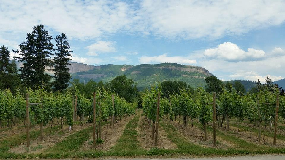 enderby cliffs from vineyard.jpg