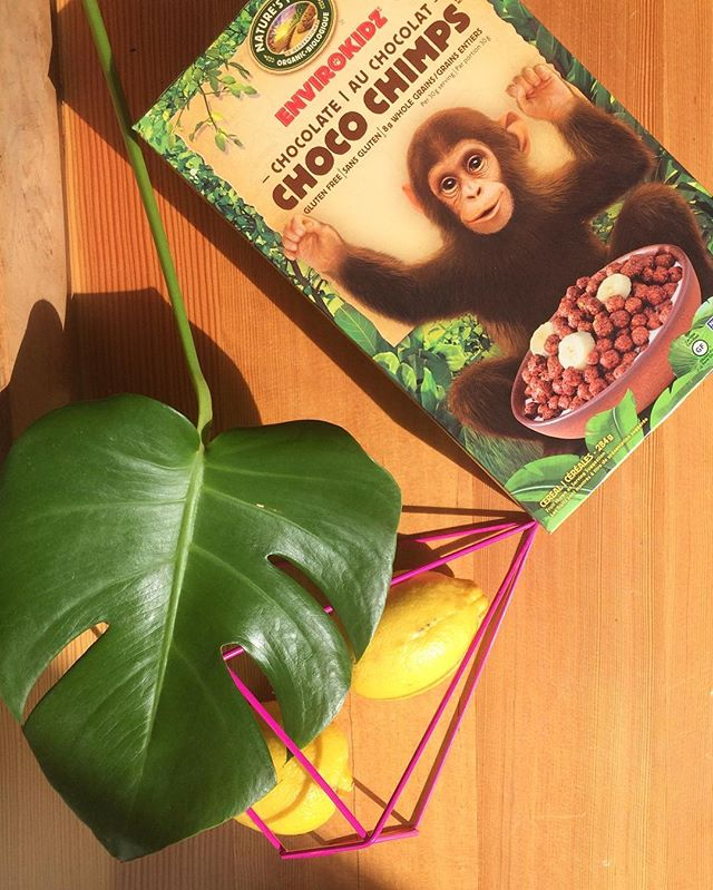 It's a jungle out there 🙉🌿 Huge shout out to @naturespathorganic @envirokidz for keeping us stocked with Choco Chimps this weekend 🙌🏼