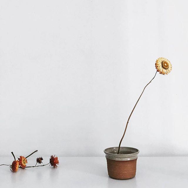 SATURDAY NIGHT: CELEBRATING THE END WINTER⠀ ⠀ ⠀ ⠀ ______⠀ .⠀ .⠀ .⠀ #vancouverisland #readyforspring #farmersmarket #erringtonfarmersmarket #strawflowers #ikebana #pottery #simplepleasures #floraldesign #minimal #poetry #design #celebrate #ahuto #collective