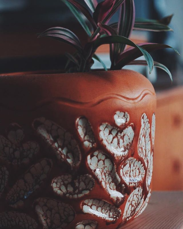 This Sunday was for acknowledging that almost all the houseplants made it through the winter. Getting better at this.⁣⠀ ⁣⠀ ⁣⠀ ⁣⠀ ⁣⠀ ______⁣⠀ .⁣⠀ .⁣⠀ .⁣⠀ #houseplant #planter #ceramic #jungalow #plants #design #plantlove #tropicalplants #mcmhome #teak #midcenturymodern #mcmdesign #palmsprings #warmdays #spring #pnwlife #vancouverisland #orange